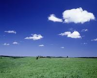 美瑛の草原