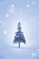 冬のクリスマスツリーの木