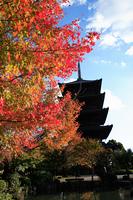 紅葉と東寺