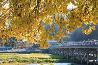 黄葉と渡月橋