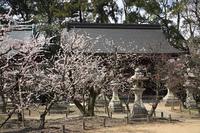 梅の花咲く北野天満宮