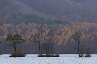 曽原湖とカラマツ