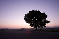 一本の木の日の出