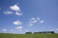 立ち木の丘と雲