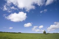 草原と立ち木と雲