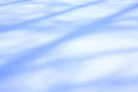 雪原の木の影