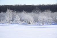 雪原の樹氷とけあらし
