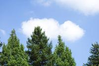 空と雲と木