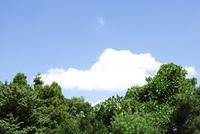 空と雲と森
