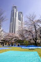 桜と高層ビル