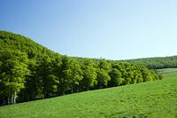 草原とブナ林