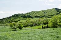 草原と木々