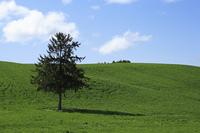 草原と一本の木