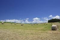 草原と牧草ロール