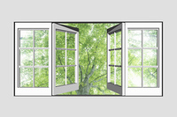 窓から新緑のブナ林