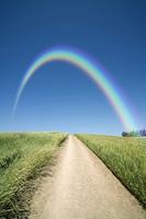 麦畑の中の道と虹
