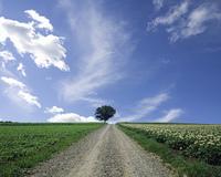 砂利の中の1本道