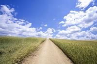 雲と麦畑の中の道