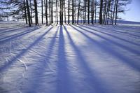 雪原にのびる木の影