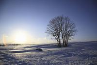 太陽と雪原の木