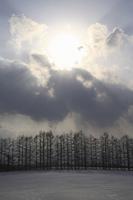 雲の切れ間の太陽とカラマツ林のシルエット
