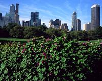 セントラルパークの花とビル街