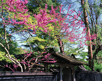 武家屋敷と樹木