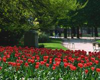 リュクサンブール公園の花壇