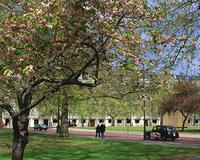 公園の花木