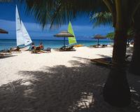 砂浜と木陰