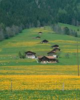 ベルン郊外の草原と住宅