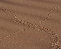 砂漠の足跡