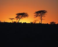夕焼け空と樹木