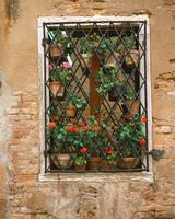 格子窓と鉢植え