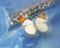 フルートと蝶