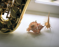 サックスと貝殻