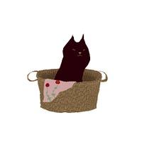 カゴの黒猫