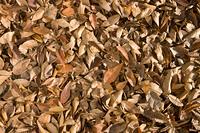 落葉が積もった地面