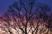 樹木のシルエット