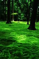 苔の絨毯と木1