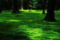 苔の絨毯と木2