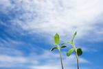 青空と新芽