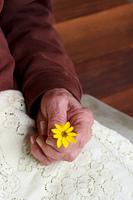 黄色い花を持ったシニアの手