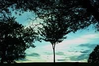 丘にある木