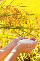 黄金色の実りと白米を持つ女性