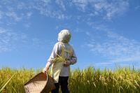 田んぼで青空見上げる女性と農業作業