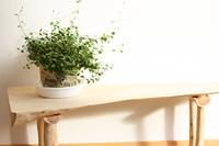玄関と植物グリーン ワーヤープランツ