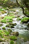 新緑の花貫渓谷