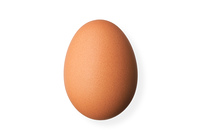 白バックの卵