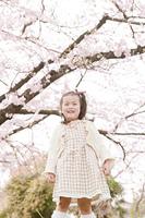 桜の木と少女